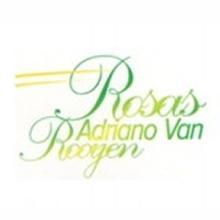 Rosas Adriano Van Rooyen